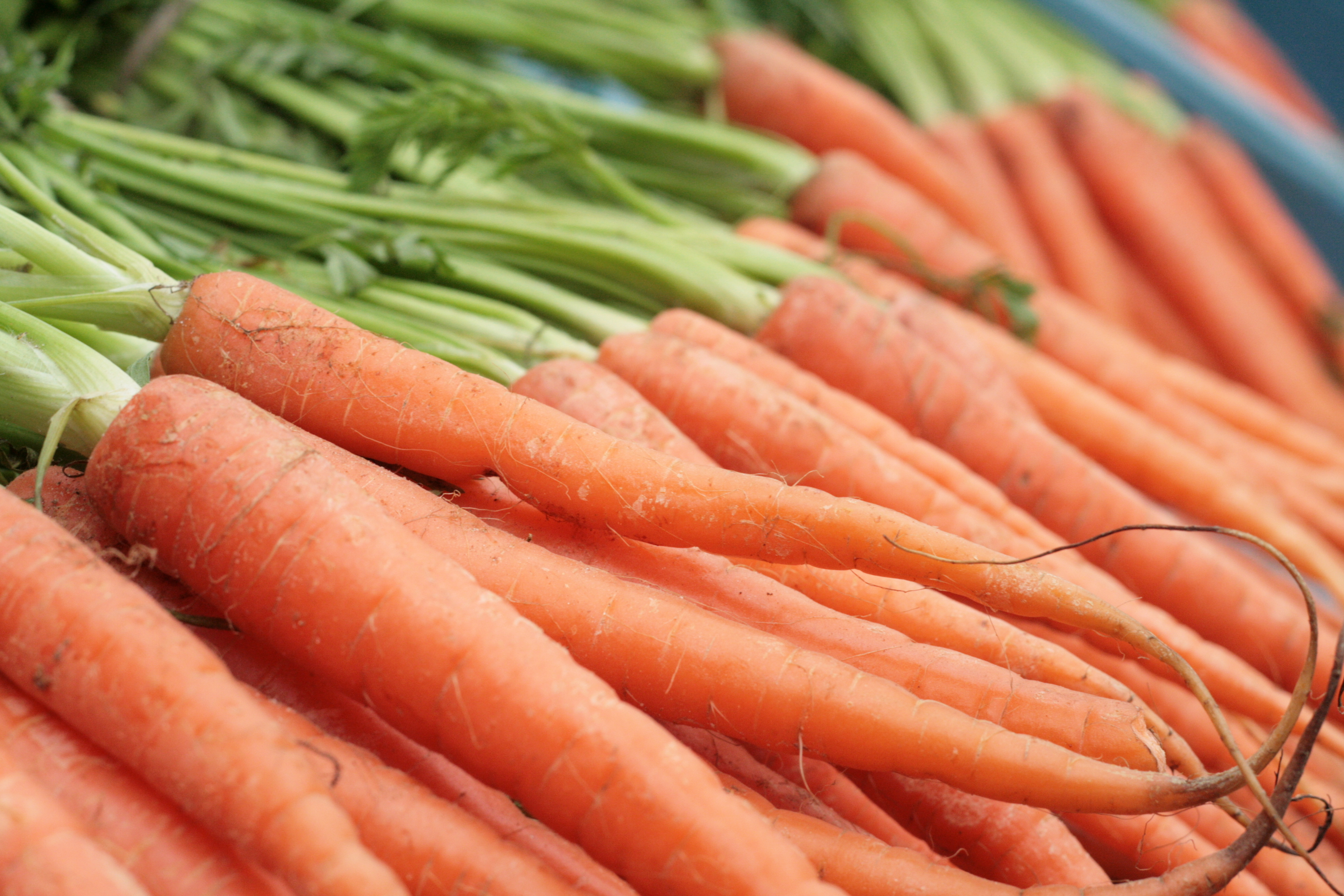 Carrots are known for their protective quality on eyesight thanks to ...
